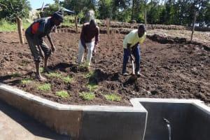 The Water Project: Bungaya Community, Charles Khainga Spring -  Grass Planting