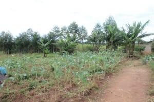 The Water Project: Sawawa Secondary School -  Kitchen Garden