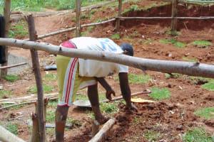 The Water Project: Ebutindi Community, Tondolo Spring -  Grass Planting