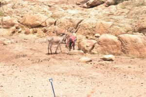 The Water Project: Kasioni Community B -  Donkeys For Carrying Water Home