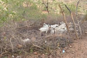 The Water Project: Nzimba Community A -  Livestock Pen