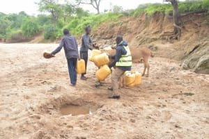 The Water Project: Mbitini Community -  Loading Up Donkeys With Water Containers