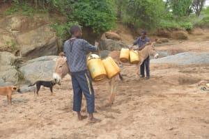 The Water Project: Mbitini Community -  Loading Up Donkeys