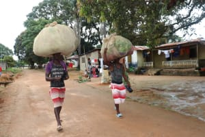 The Water Project: Lungi, Mahera, Mahera Health Clinic -  Young Men Carrying Potato Leaves And Cassava Leaves On Their Heads