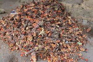 The Water Project: Lungi, Rosint, #26 Old Town Road -  Palm Kernel Set For Palm Oil Processing