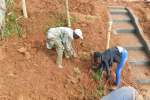 The Water Project: Emulembo Community, Gideon Spring -  Planting Grass
