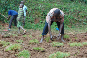 The Water Project: Bumira Community, Madegwa Spring -  Grass Planting In And Around The Spring Box