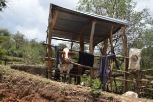 The Water Project: Nduumoni Community -  Cattle Pen