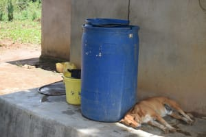 The Water Project: Nduumoni Community A -  Water Storage Containers And Their Guard Dog