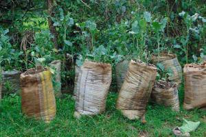 The Water Project: Kapsegeli KAG Primary School -  School Vegetable Garden
