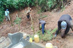 The Water Project: Kisasi Community, Edward Sabwa Spring -  Grass Planting