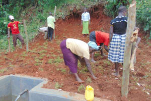 The Water Project: Jivovoli Community, Magumba Spring -  Grass Planting