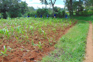 The Water Project: Jamulongoji Primary School -  Community Farm On Walk From Spring