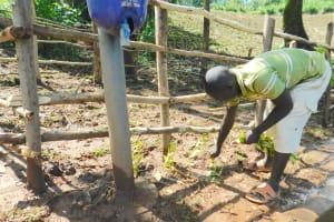 The Water Project: Imbinga Community, Imbinga Spring -  Grass Planting