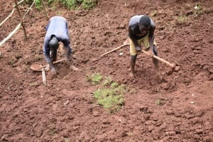 The Water Project: Busichula Community, Marko Spring -  Planting Grass