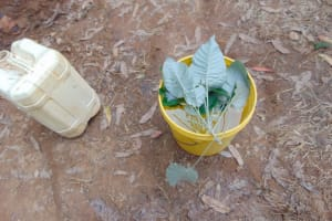 The Water Project: Shivembe Community, Murumbi Spring -  Leave The Leaves Out Water Handling Session