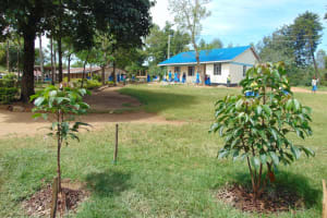 The Water Project: Shikomoli Primary School -  School Grounds