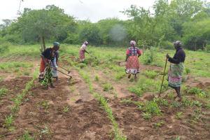 The Water Project: Kathamba ngii Community C -  Working On The Farm