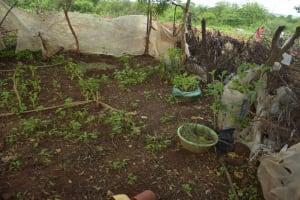 The Water Project: Kathamba ngii Community B -  Garden