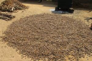 The Water Project: Lokomasama, Gbonkogbonko Village -  Palm Karnel