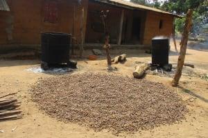 The Water Project: Lokomasama, Gbonkogbonko Village -  Palm Kernal Processsing