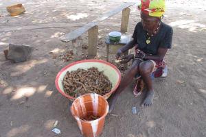 The Water Project: Lokomasama, Gbonkogbonko Village -  Processing Tamerine