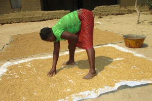 The Water Project: Lokomsama, Lumpa Wallah Village -  Woman Drying Rice Seed Under Sunlight