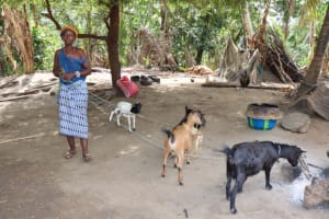 The Water Project: Polloth Village, Kroo Town Area -  Woman Taking Her Goats For Feeding