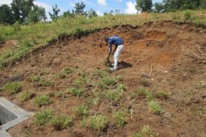 The Water Project: Kalenda A Community, Webo Simali Spring -  Planting Grass