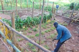 The Water Project: Imusutsu Community, Ikosangwa Spring -  Grass Planting