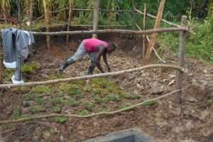 The Water Project: Kalenda B Community, Lumbasi Spring -  Grass Planting