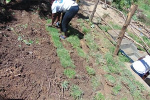 The Water Project: Mukangu Community, Metah Spring -  Grass Planting