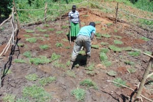 The Water Project: Maondo Community, Ambundo Spring -  Planting Grass