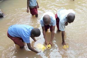 The Water Project: Kipchorwa Primary School -  Fetching Dirty Stream Water