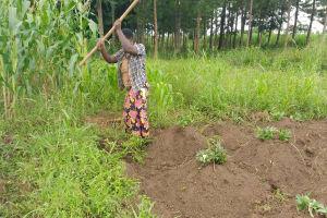 The Water Project: Rubona Kyawendera Community -  Working On The Garden