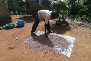 The Water Project: Kabo Village -  Drying Beans