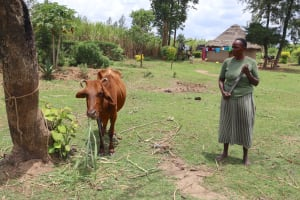 The Water Project: Mukhuyu Community, Chisombe Spring -  A Woman Grazes Her Cow