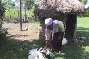The Water Project: Mahira Community, Litinyi Spring -  Agnes Petting Her Calf