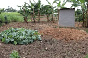 The Water Project: Mukhuyu Community, Chisombe Spring -  Garden