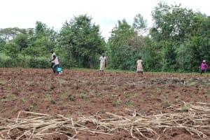 The Water Project: Mahira Community, Litinyi Spring -  Farming