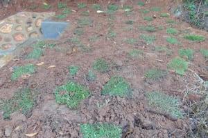 The Water Project: Chepnonochi Community, Shikati Spring -  Grass Planting Progress
