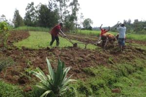 The Water Project: Mahira Community, Kusimba Spring -  Using Cows To Till Land
