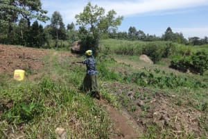 The Water Project: Mahira Community, Jairus Mwera Spring -  A Woman Carries Water From The Spring