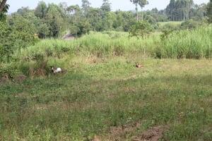 The Water Project: Litinye Community, Shivina Spring -  Community Landscape Including Goats