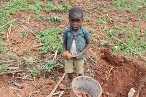 The Water Project: Harambee Community, Elijah Kwalanda Spring -  Collecting Harvested Sweet Potatoes