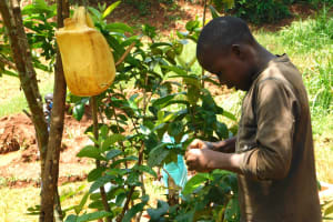 The Water Project: Shikhombero Community, Atondola Spring -  Keenly Washing His Hands