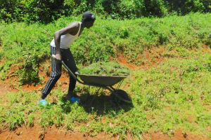 The Water Project: Shikangania Community, Abungana Spring -  Bringing Grass To Plant Over Spring