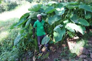 The Water Project: Mahira Community, Kusimba Spring -  Mr Kusimba At His Yam Farm