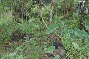 The Water Project: Mahira Community, Anunda Spring -  A Backyard Farm