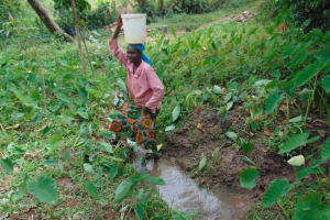 The Water Project: Nguvuli Community, Busuku Spring -  Collecting Water At Busuku Water Point